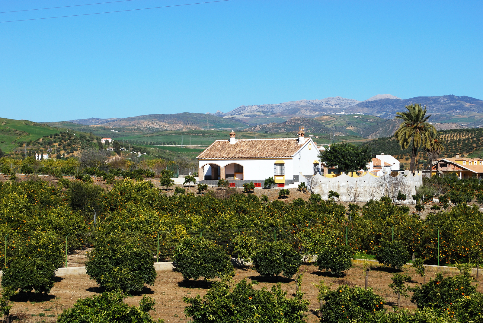 Pizarra property and living Orange grove and farm, Andalusia, Spain.