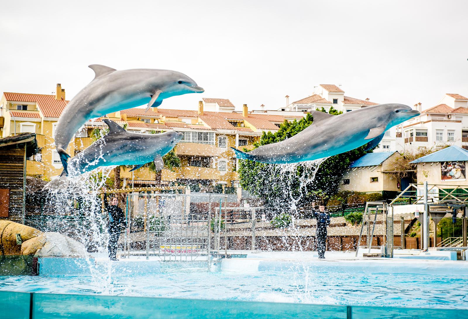 Arroyo de la Miel Dolphins show in Selwo Marina in Benalmadena, Malaga.