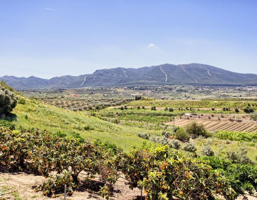 Large finca in Alhaurin el Grande
