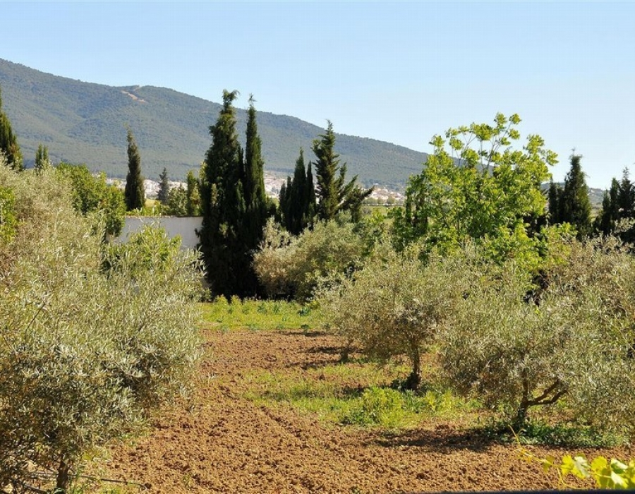 Finca in Alhaurin el Grande for sale